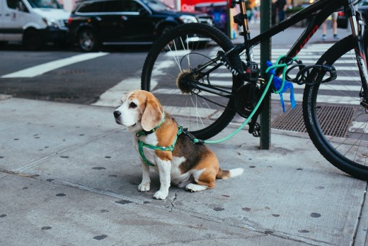 A dog tied to a bicycle