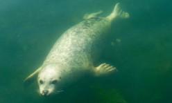 Seals in the Baltic Sea