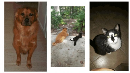My Four-Legged Family and How Much We Have Gained From Them.