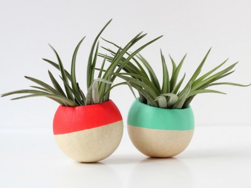Air plants add greenery, are super cute and they don't take much care.
