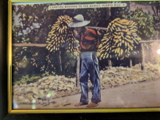 "Caption above picture reads ""MAN CARRYING BANANAS TO MARKET, PUERTO RICO"""