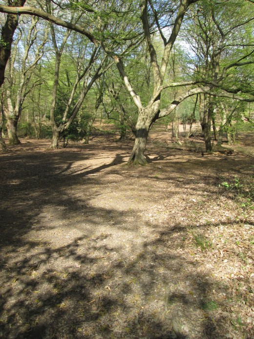 Start at the car park by the green tea hut opposite the 'King's Oak' hotel. Walk towards the traffic barrier at the end of the bridle path (same side of the road) and stroll past to the crest of the hill. There are various ways to descend the slope.