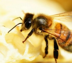 Buzzing Facts: Amazing Bees
