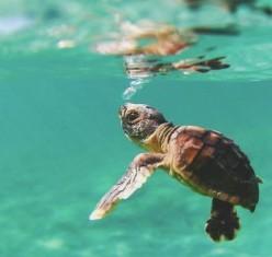 Down in the Depths: Ocean Awareness