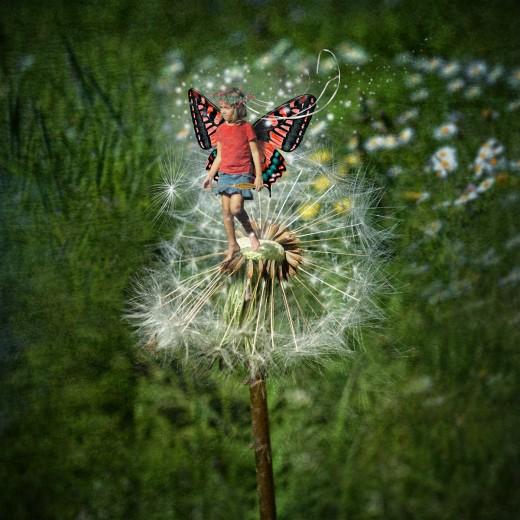 The Dandelion Fairy
