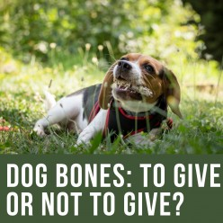 Are Bones Safe for Dogs?