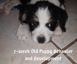 Puppy Stages: 7-Week-Old Puppy Behavior and Development