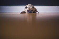 Things That Scare Dogs (and How to Tell When They're Afraid)