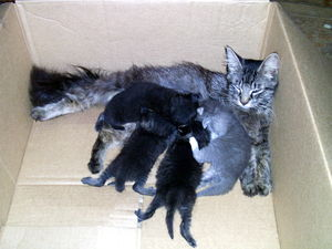 Mama cat and four 3-week-old kittens