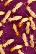 10 Household Bugs to Keep Out of Your Florida Home