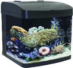 Setting Up Fish Tanks: What You Need to Know