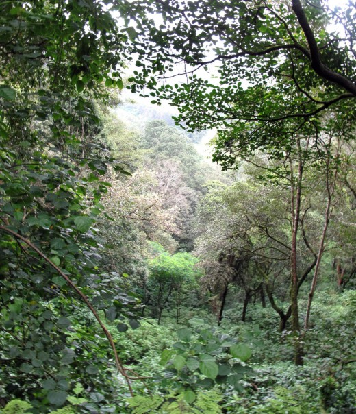 A view of Western Ghats forest of South India