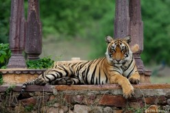 List of Famous Wildlife Sanctuary and National Parks in Rajasthan