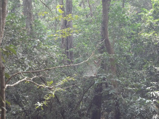 Forest _view