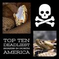 Top Ten Deadliest Snakes in North America