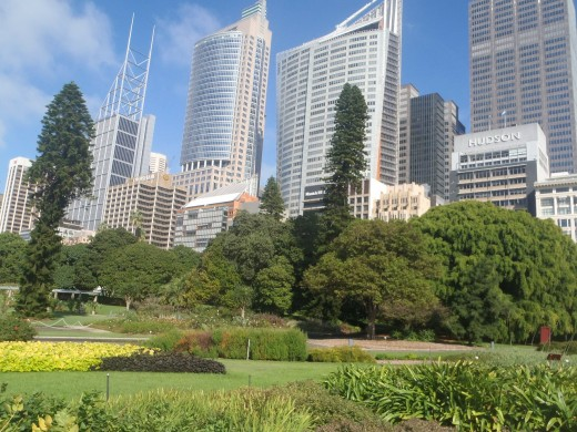 The Botanic Gardens and Sydney skyscrapers.