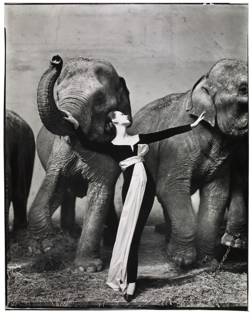 Richard Avedon, Dovima with Elephants, evening dress by Dior, Cirque d'Hiver, Paris, August 1955, printed 1978. 50 x 40 in. Gelatin silver print, the Museum of Fine Arts, Houston, gift of Karen Kelsey Duddlesten in honor of Anne Wilkes Tucker on the