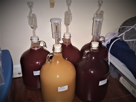 First five fruit wines from my city homestead