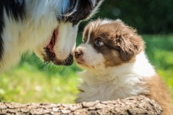 The Ultimate Guide To Training Your Puppy