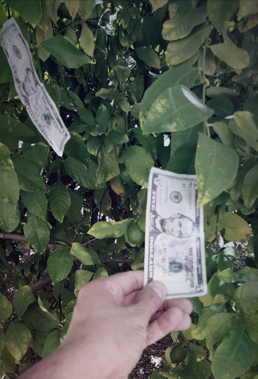 Plucking bucks from the tree of cash