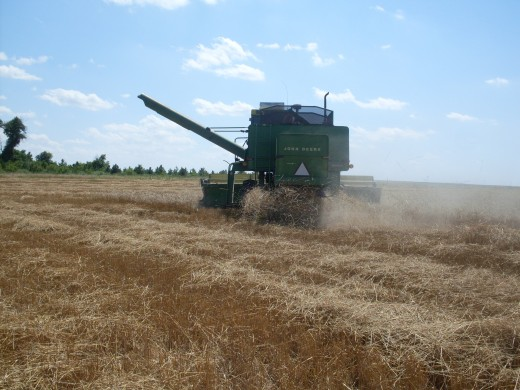 As the combine begins its turn, you can see the chaff being spit out the back.