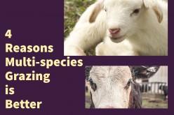 Four Reasons Multi-species Grazing is Better