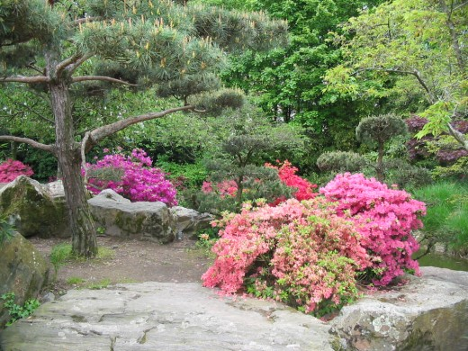 Japanese Garden Design Tips