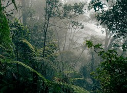 Our Rainforests Are Burning: Here Is What You Can Do