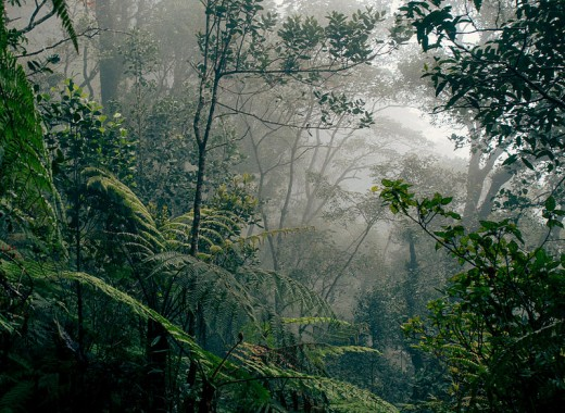 Borneo Rainforest, Indonesia