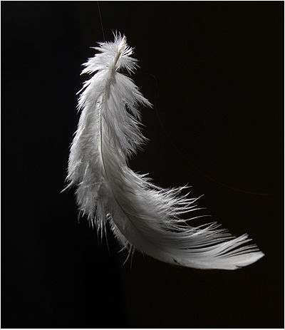 Caught in the beauty of it's motion, I slipped between the cracks. Now I am that feather, light as air...