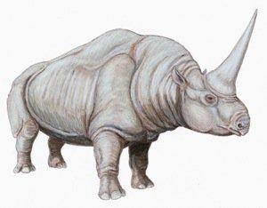 Elasmotherium the real Unicorn