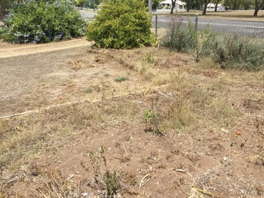 Garden, what garden. No green grass in sight
