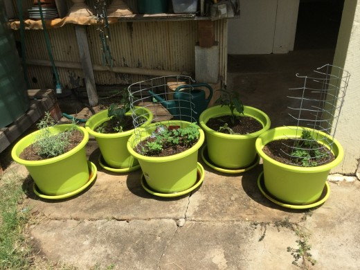 The only way we can grow vegetables and herbs and keep them alive is in pots
