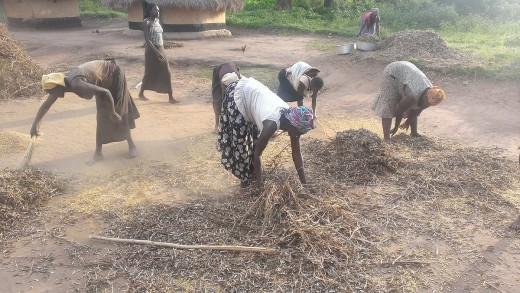 Women in Uganda work on a meagre soya bean crop.