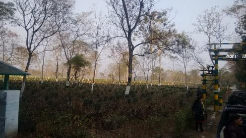 The enchanting beauty of Gorumara National Park