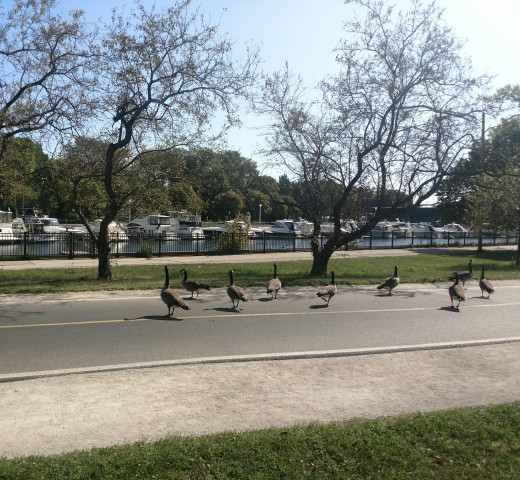 """Lakeview """"residents""""  enjoying a walk by the harbor."""