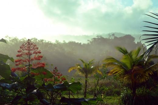 Rural French Guiana