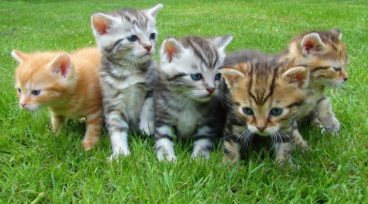 Unlike humans, some animals, such as cats have several fathers, and a litter might contain a variety of characteristics and traits from their respective fathers.
