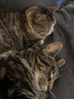 Cat Behaviour Problems
