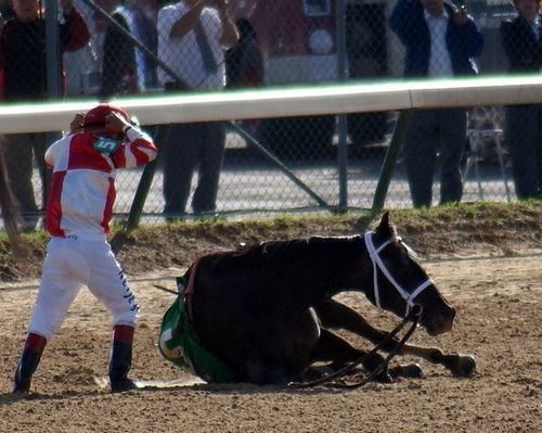 Eight Belles collapsing moments after finishing 2nd at the 2008 Kentucky Derby. Due to her severe ankle injuries, she was euthanized on the spot in front of tens of thousands of Derby spectators.