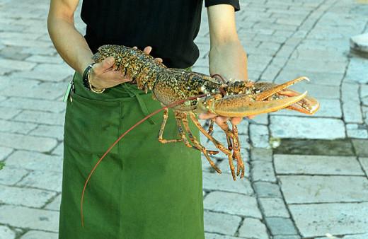 A live European lobster.