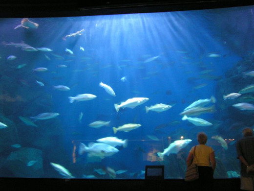 A sea zoo provides a window into an otherwise hidden seascape.