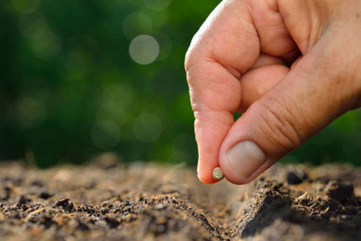 A farmer (sower) planting (sowing) a seed