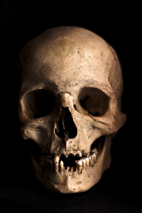 This photo symbolizes more than just a skull but also it symbolizes what would be the end of the band Death in terms of their full length album releases.