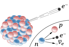 Radioactive beta decay is due to the weak force, which turns a neutron into a proton and an electron into an electron antineutrino.