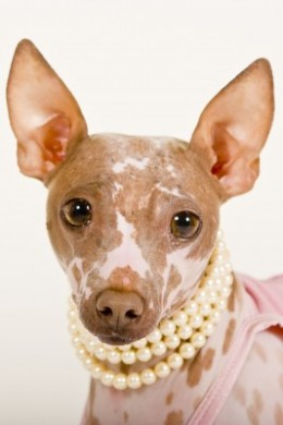 Some dogs are born with no hair! Bald is beautiful!