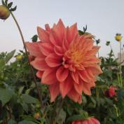 Shubhda Ahlawat profile image