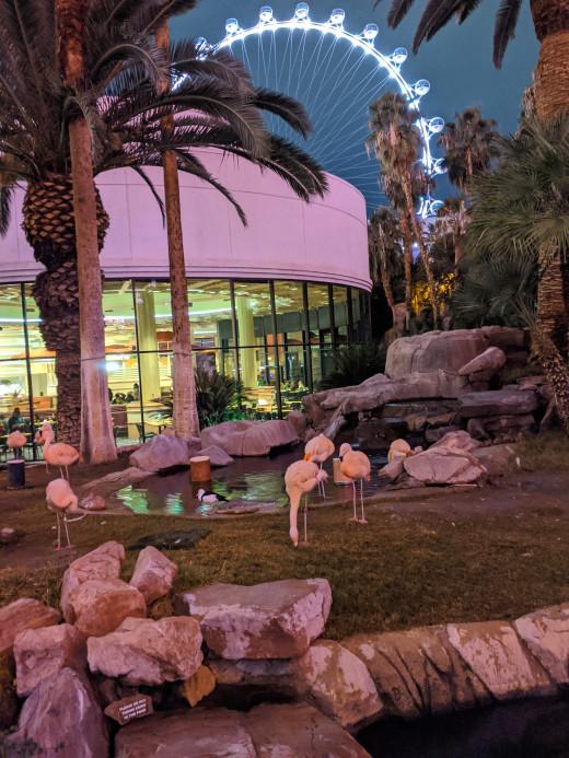 Flamingos in garden of Flamingo Resort