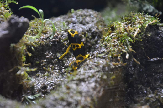 Colourful frog at the ocean world