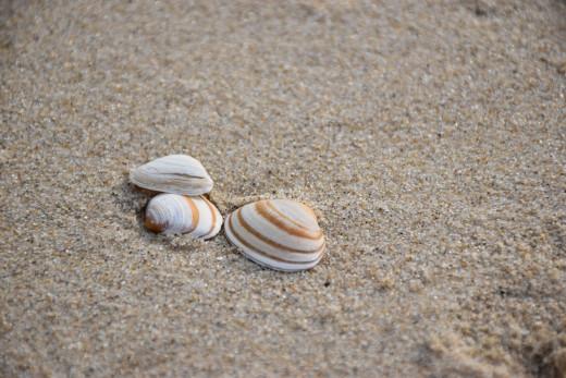 Three seashells on a sand by the seashore. Photo by Stephan H. on Unsplash